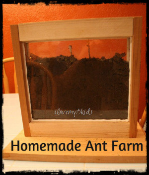 Homemade Ant Farm