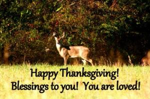 Buck at Thanksgiving