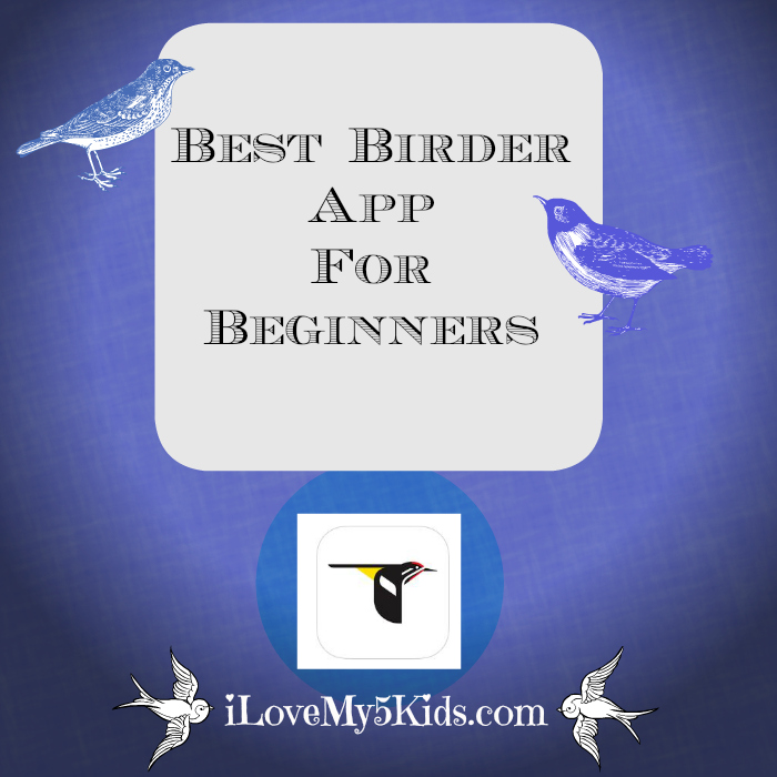 Best Birder App for Beginners
